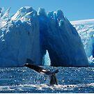 Tale of a Whale by rrutten