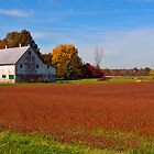 Ohio Farm Land by terrylazar