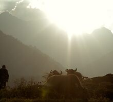 Sunset - My way of contemplating life with the herd (Sapa, Vietnam) by Aiwei Yu