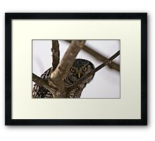 Peek a boo I see you Framed Print