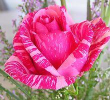 A Rose by Al Mullen