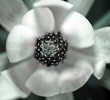 Flower 2 by Adam Hardyman
