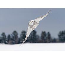 Like a Jet... Photographic Print