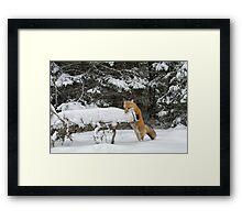 Discovering Snow... Framed Print
