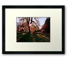 Autumn shadows Framed Print