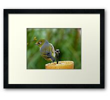 I Nailed It!!! - Silver-Eye - NZ Framed Print