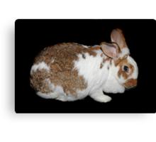 California Giant Bunny Canvas Print