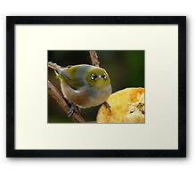 Come A Little Bit Closer!!! - Close Up - Silver-Eye - NZ Framed Print