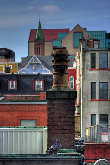 Rooftop Wildlife by Kevin  Kroeker