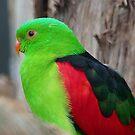 I Wear A Hi-Viz Safety Vest - Red Winged Parrot - NZ by AndreaEL