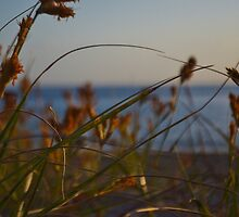 Grassy View by Chris Hinde