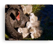 I'm Listening Little Lilly - Black Swans - Cygnets - NZ Canvas Print