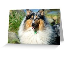 You Got To Smile Like This Lassie... - Collie - NZ Greeting Card