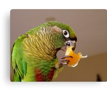Pure Delish - Echo - Maroon-Bellied Conure - NZ Canvas Print