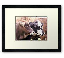 Baby Bulls Framed Print