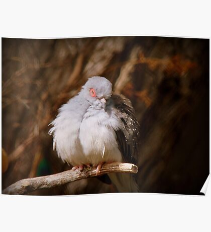 I'ts Snooze Time - Diamond Dove - NZ Poster