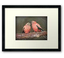 Our Adoration Speaks Volumes - Bourke Parrots - NZ Framed Print