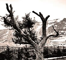 Lonesome by Georgi Bitar