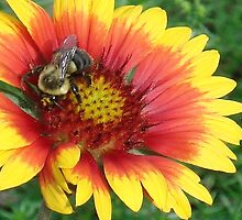 Bee by piermbrown