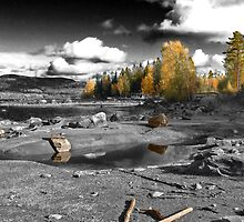 Autumn Contrast by Ravenor
