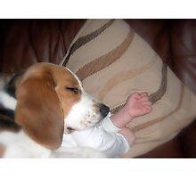 Sleeping dogs LIE Photographic Print
