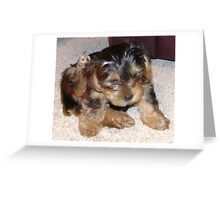 Puppy scratches Greeting Card