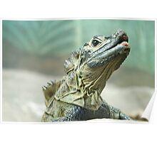 Epic Lizard  Poster