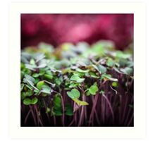 Colorful Sprouts Art Print