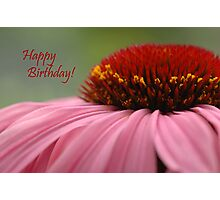 Echinacea Birthday Card Photographic Print