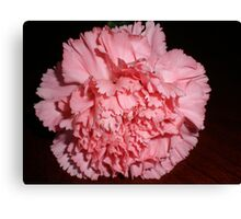 Pink carnation Canvas Print