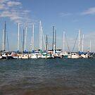 Hastings Marina by oiseau