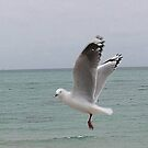 Sea Gull  Rose Bud Beach by oiseau