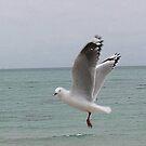 Sea Gull  Rose Bud Beach by oiseau