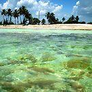 Tropical Paradise by Daniela Weil