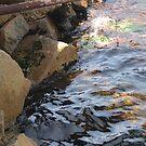 Clear clear waters by oiseau