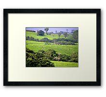 Tea picking-Mulanje Malawi Framed Print