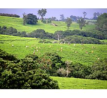 Tea picking-Mulanje Malawi Photographic Print