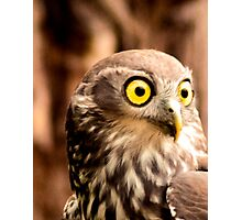Barking Owl 2 Photographic Print