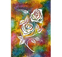 White Roses - A statement piece Photographic Print