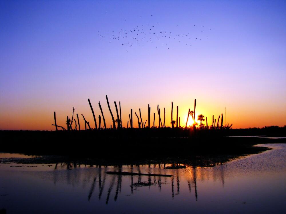 Wetlands Evening by Rebecca Cruz