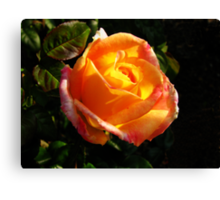 Sunlit Rose Canvas Print