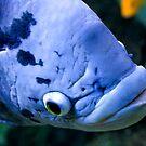 Blue Fish by Luke Haggis