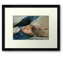 Asleep on the beach Framed Print