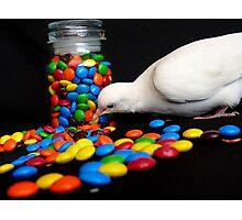 Mmmm... I'm So Sweet - White Dove - NZ Photographic Print