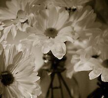 Petals and Light by alissawilkinson