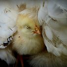 I Love My Feather Bed!! - Sussex Chick - NZ by AndreaEL