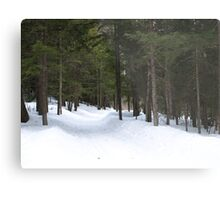 NC winter scene Metal Print