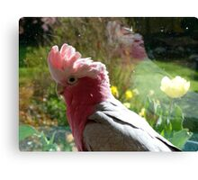 I Just Love Spring... Galah - NZ Canvas Print