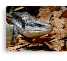 I'll Just Slide Past You... Blue Tongued Skink - NZ Canvas Print