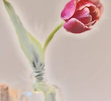 bottled tulip by Barbara Rahal